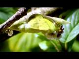 Бабочка-Лена Валевская
