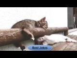 Подборка новых приколов за март 2016!!! улётное видео со смешными котами