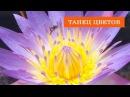 🌹 Танец цветов Потрясающе 😍😍😍 Невероятная съемка Time lapse flowers