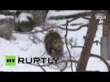 В Хельсинки бурые медведи пробудились от спячки на месяц раньше обычного