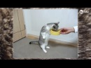 Парад мартовских котов