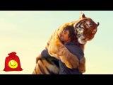 Тигры, львы и гепарды любят ласку. Подборка больших кошек
