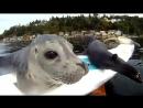 Seal Pup Slip n Slide