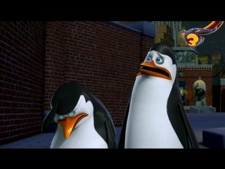 Пингвины из Мадагаскара 2 сезон 22 серия отрывок