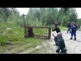 Поймали медведя в клетку