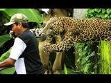 СТРОГО 18+ Нападение животных на людей. Подборка от Funny channel