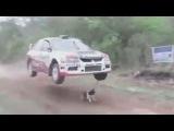 Чудесное спасение собаки на автогонке в Боливии.