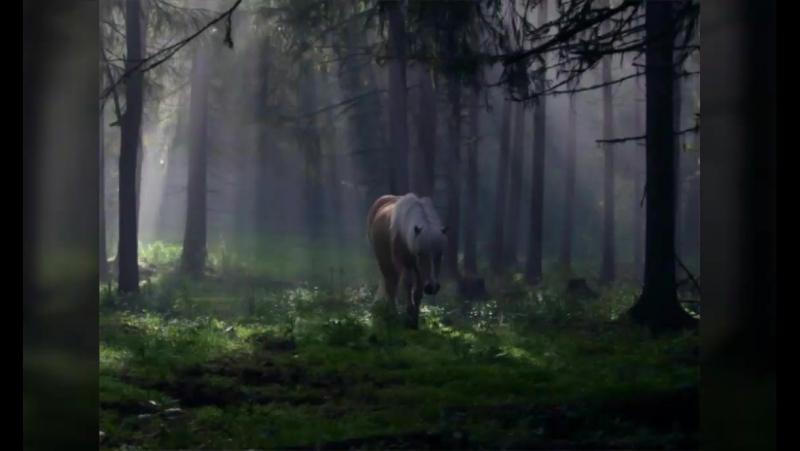 Владимир Моисейкин Ходят кони над рекою