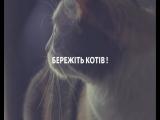 День кота  • Телеканал СТБ