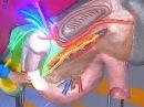 Жить Здорово Симптомы язвы двенадцатиперстной кишки
