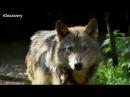 Человек-волк - Сверхлюди Стэна Ли
