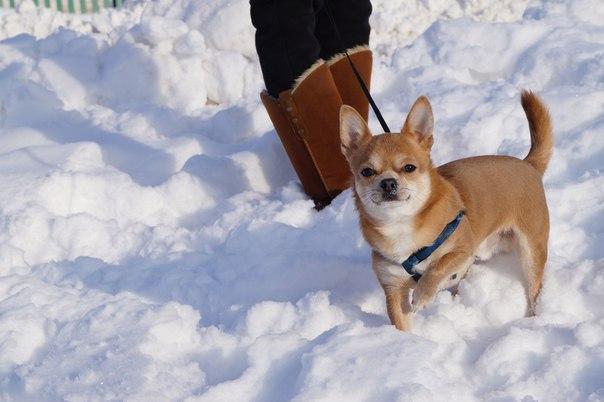 Много снега не бывает))))))