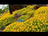 Супер красивое видео о природе Земли под музыку Amethystium.
