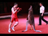 Кенгуру-боксер и другие цирковые артисты! Boxing Kangoroo! Дай Лапу