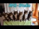 Синхронные котята под музыку AN3