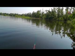 Одна из заводей реки Кубань. Рыбалка на поплавочную удочку. карась, подлещик. fishing