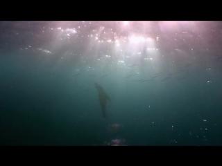 Water Life | Вода - линия жизни 01. Мир воды (2009) HD