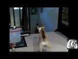 Самое Смешное Видео:  Кошки против Собаки Кто Кого