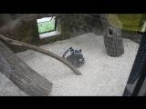 Парк птиц. Лемуры чешут спинки