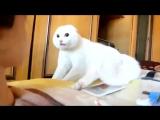 Кот не в восторге от этого лица