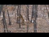 съёмки Амура и Тимура в Приморском Сафари-парке