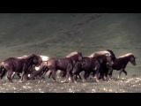 Tengger Cavalry - War Horse