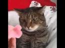 Я принес тебе петунии Кот в шоке