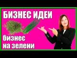 Выращивание Зелени Лука и Укропа