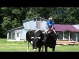 Kaleigh Hamel on Teaching Cattle to Ride