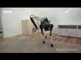 Новейший робот SpotMini поскользнулся на банановой кожуре.
