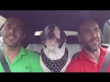 2 брата и пес
