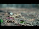 Datuna Mgeladze - Shemodgomis potlebi _ დათუნა მგელაძე - შემოდგომის ფოთლები (Official Video) [HD]