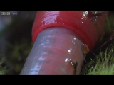 Monster leech swallows giant worm - Wonders of the Monsoon׃ Episode 4 - BBC Two