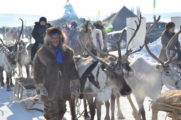 Травить волков ядами предложили оленеводы Якутии