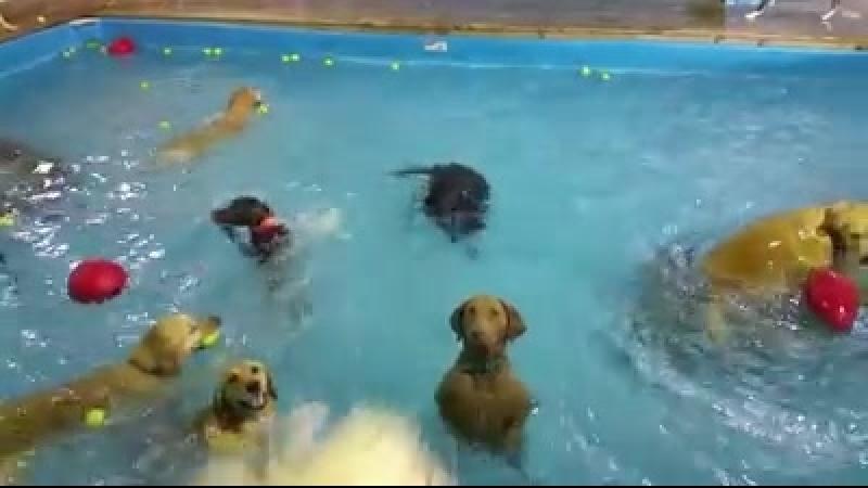 Відео з сумною собакою стало хітом соцмереж смотреть онлайн без регистрации