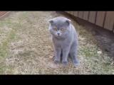 Кот ругается на хозяйку - [Веселые Кавказцы]