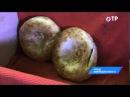 Малые города России: Сольцы - минеральные озера, Владение Бабы Яги и большая картина Новгородчины
