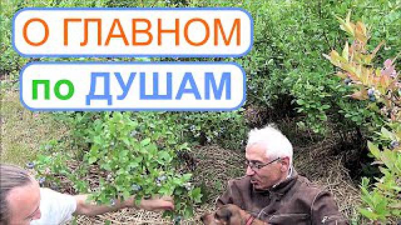 Голубика 2. Беседа Фролова Ю.А. с Юрием Даниловичем - хозяином питомника.