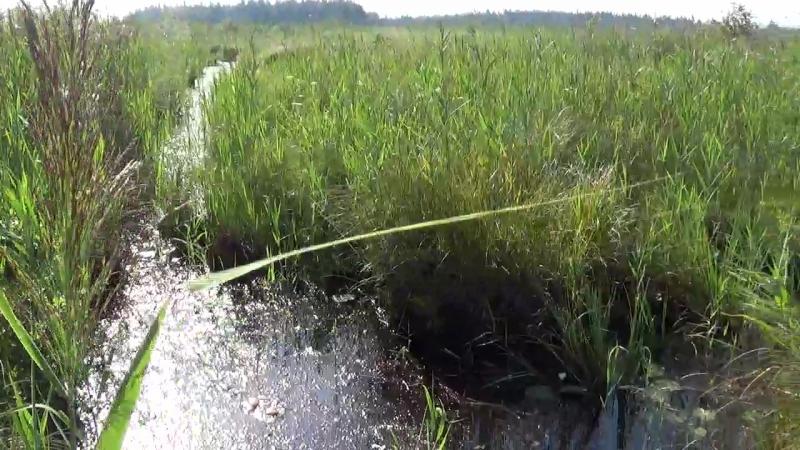 Ольманские болота Второй переход по безтропному болоту Разведка