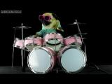 Собака мопс играет Металлику на барабанах - Dog is playing drums - Metallica Enter Sandman