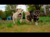 "Puppies Laika ""Big Family"" (Slow Motion)"
