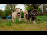 "Puppies Laika ""Big Family"" (Slow Motion)"