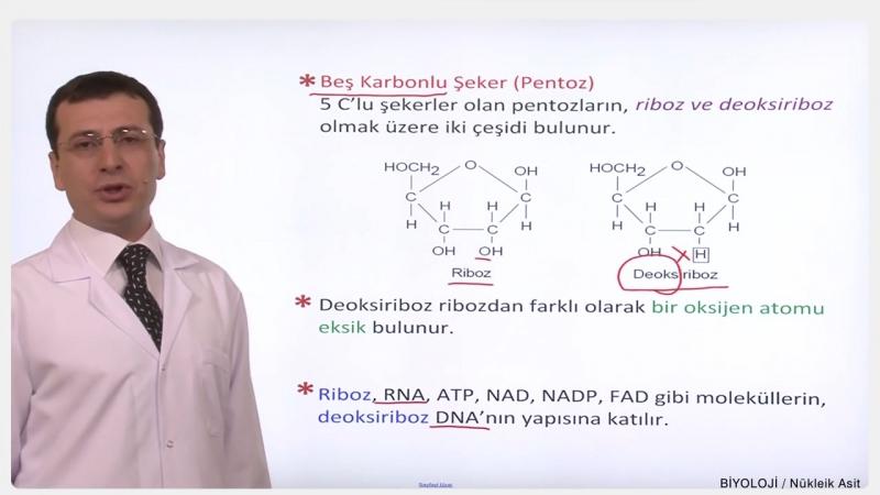 YGS-LYS BİYOLOJİ - Nükleik Asitler 1