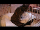 Кошка сбитая около Авиценны