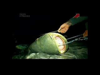 Mammoth catfish tall 8.20 feet vs little boat