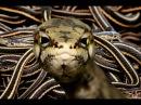 The Animal Sounds: Snake Sound Effects - Animation