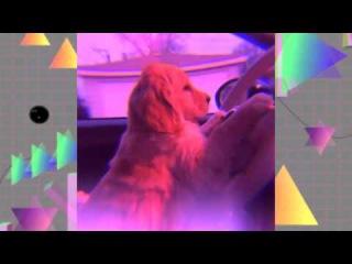 Future funk doggo