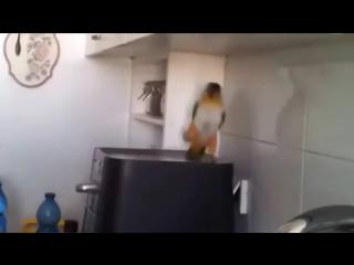 Крутой татарский попугай. Отжигает парень !