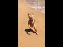 Дикий пляж и Лева