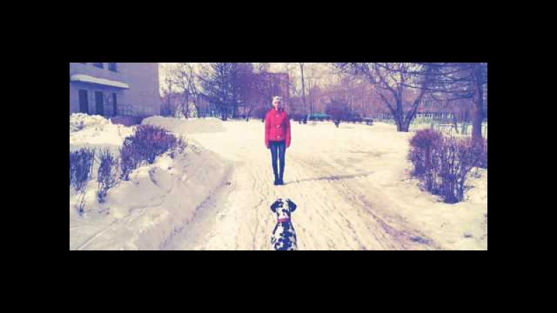Natali Gold Advice In Dog Training